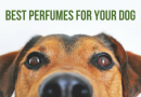 9 Perfumes for Your Dog that Both You and Your Paw Buddy Will Love